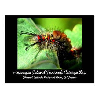 Anacapa Island Tussock Caterpillar Post Card