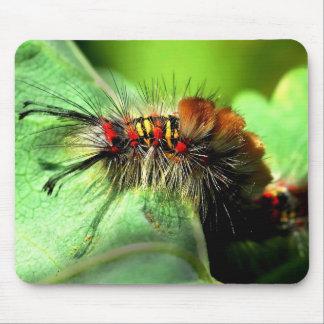 Anacapa Island Tussock Moth Caterpillar Mouse Pad