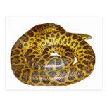 Anaconda amarillo tarjetas postales