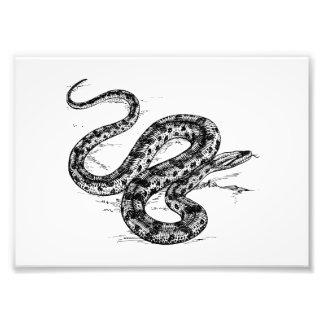 Anaconda Impresion Fotografica