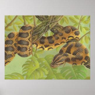 Anaconda Póster