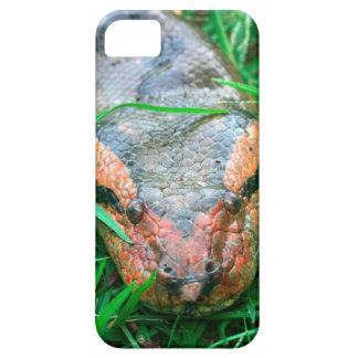 Anaconda snake Amazon Peru iPhone 5 Covers