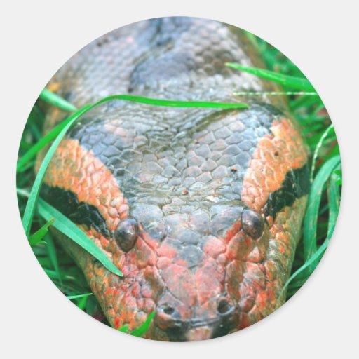 Anaconda snake Amazon Peru Round Stickers