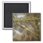 Anaconda verde imanes de nevera