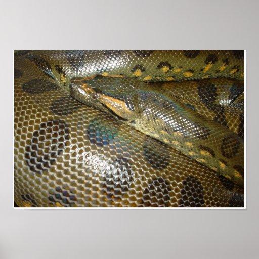 Anaconda verde posters