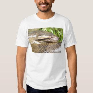 Anaconda verde remeras