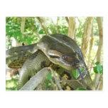 Anaconda verde tarjeta postal