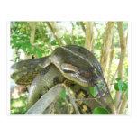Anaconda verde tarjetas postales