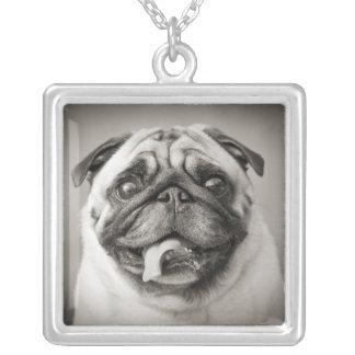 Añada su propio collar adaptable de la foto el |