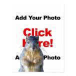 Añada una postal de encargo de la foto de la