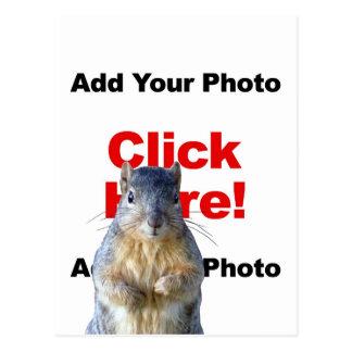 Añada una postal de encargo de la foto de la ardil