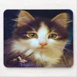 Anakin Two Legged Cat Cute Kitten Mousepad CloseUp
