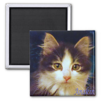 Anakin Two Legged Cat, Cute Kitten Square Magnet
