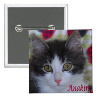 Anakin Two Legged Cat, Ladybugs Cute Kitten Button