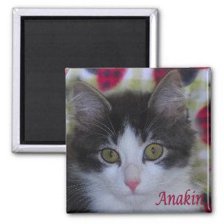Anakin Two Legged Cat Ladybugs Kitten Magnet