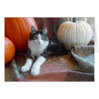 Anakin Two Legged Cat & Pumpkins Fall Cat Card