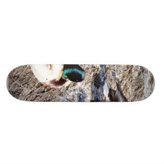 Anas Platyrhynchos Skate Deck
