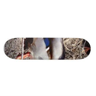Anas Platyrhynchos Sunbathing Mallard Custom Skate Board