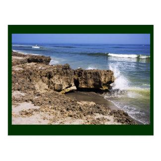 Anastasia Formation Hutchinson Island, Florida Postcard