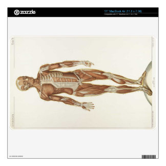 """Anaterior Anatomy of Muscles Skins For 11"""" MacBook Air"""