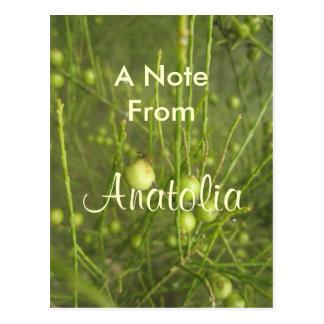 Anatolia Postcard