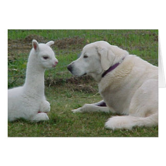 Anatolian shepherd and alpaca baby card