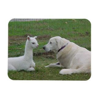 Anatolian Shepherd and Alpaca Cria Rectangular Photo Magnet