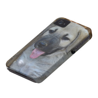 Anatolian Shepherd Dog Case-Mate iPhone 4 Case