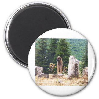 Anatolian Shepherd Dog -  Ephesus, Turkey 2 Inch Round Magnet