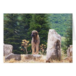 Anatolian Shepherd Dog -  Ephesus, Turkey Card