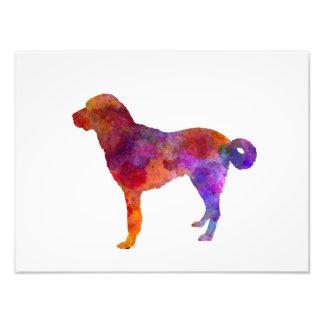 Anatolian Shepherd Dog in watercolor Photo Print