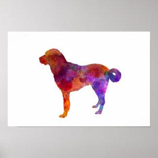 Anatolian Shepherd Dog in watercolor Poster