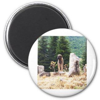 Anatolian Shepherd Dog  photograph taken at Ephesu 2 Inch Round Magnet