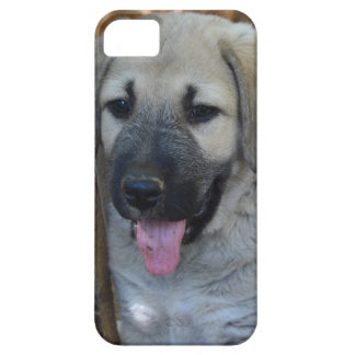 Anatolian Shepherd Puppy iPhone SE/5/5s Case