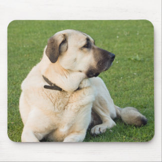 Anatolian Shepherd Relaxing in Grass Mouse Pad