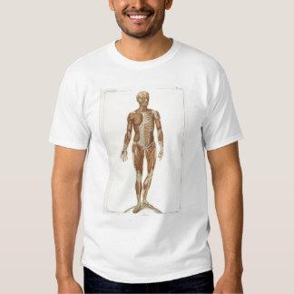 Anatomía anterior poleras