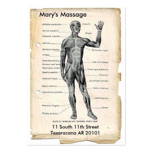 Anatomía anterior y posterior tarjeta de visita