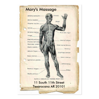Anatomía anterior y posterior tarjetas de visita grandes