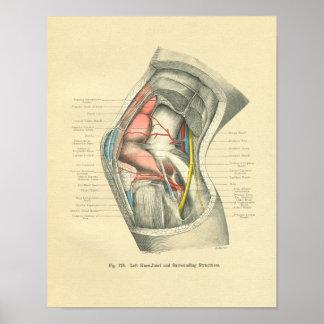 Anatomía de Frohse del vintage de la junta de rodi Impresiones