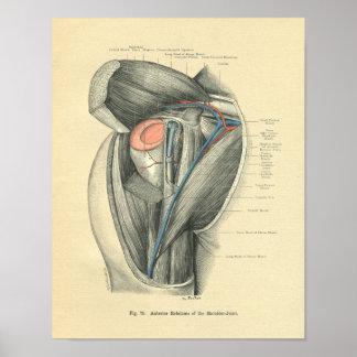 Anatomía de Frohse del vintage del brazo y del hom Posters