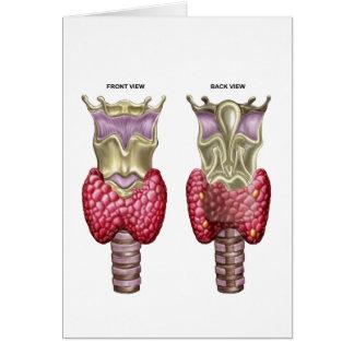 Anatomía de la glándula tiroides con la laringe y tarjeta de felicitación