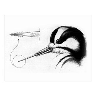 Anatomía de la lengua de la pulsación de corriente tarjeta postal