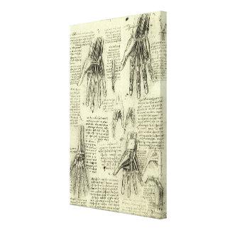 Anatomía de la mano humana de Leonardo da Vinci Lona Envuelta Para Galerias