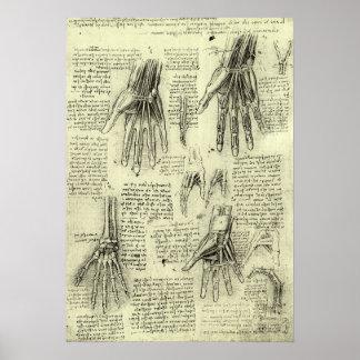 Anatomía de la mano humana de Leonardo da Vinci Póster