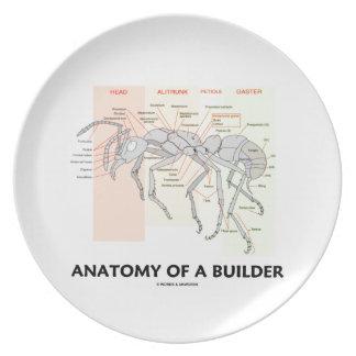 Anatomía de un constructor (anatomía de la hormiga platos de comidas