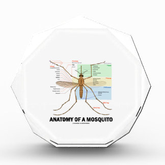 Anatomía de un mosquito (entomología)