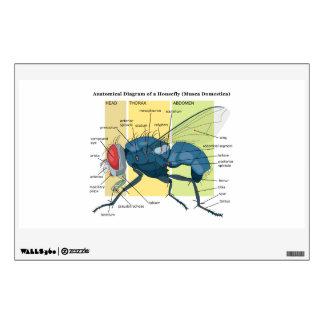 Anatomía de un Musca Domestica del diagrama de la