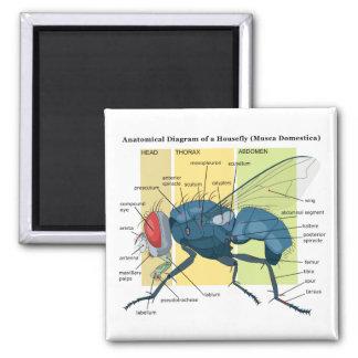 Anatomía de un Musca Domestica del diagrama de la  Imán Cuadrado