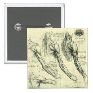 Anatomía del brazo y del hombro de Leonardo da Pin Cuadrada 5 Cm