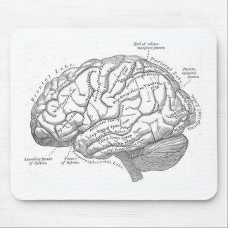 Anatomía del cerebro del vintage alfombrillas de ratón